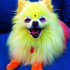 dog colorful
