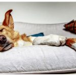 3 Ways Dogs Can Help Fight Addiction